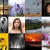 Fotokonkurransen 2014