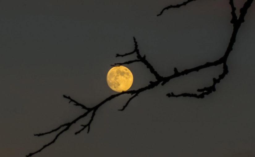Månedens bilde desember 19